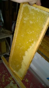 Uncapped comb for extraction.